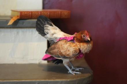 Siempre me dicen que tengo patas de pollo. Es hora de remediarlo.