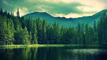 lago-bosque-y-montañas_1106484074